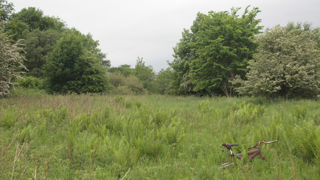 An overgrown field with trees at the back and a rusty bicycle frame in the foreground