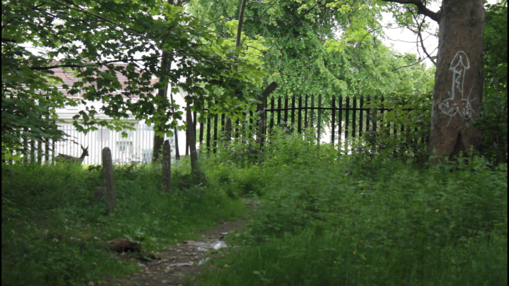 A landscape image of a scruffy path overgrown with grass and weeds. Graffitied on a tree trunk is a penis